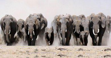 Para entender o comportamento de manada