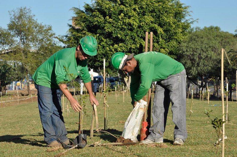 MRV Engenharia planta 1 milhão de árvores