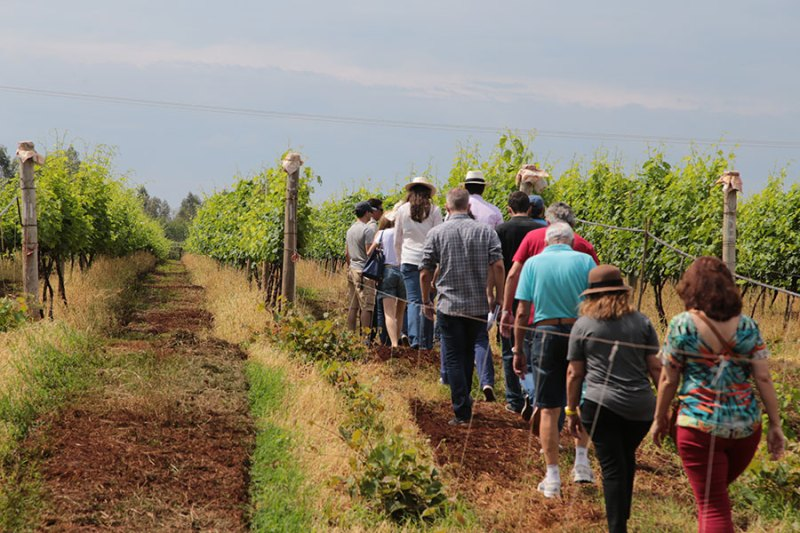 Carnaval com visita aos vinhedos da Vinícola Marchese di Ivrea