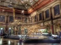 Interviajes Museo de Historia Natural en Berlín.