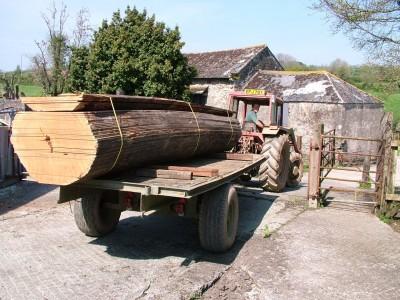 Mahogany log for building clinker dinghy