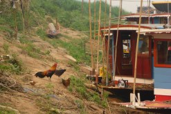 Mekong 8