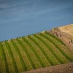 Klerck, Murray win Wines2Whales Adventure
