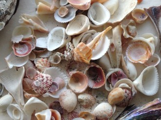 Shells, shells and more shells