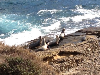 Sun Bathing, Point Lobos Reserve