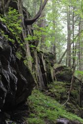 The Flume, Franconia Notch State Park