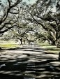 Live oak trees and moss throw shadows on a path through Audubon Park in New Orleans on a Sunday morning.