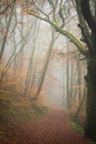 4-autumn-mist