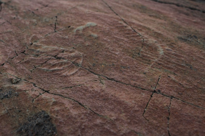 Mistaken Point – Fossilien
