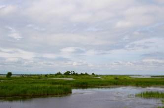 Buschlandschaft auf Hecla Island