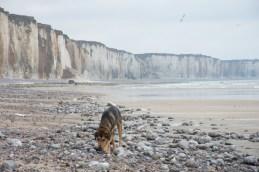 Stranderkundung bei Veules-les-Roses