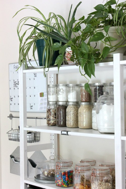 open shelving pantry with plants