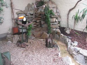 paultons park toucan