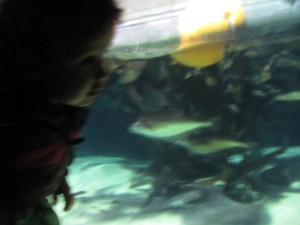 baby at london aquarium looking at fish