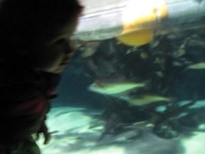 baby at london aquarium looking at fish