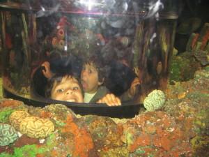 legoland atlantis aquarium