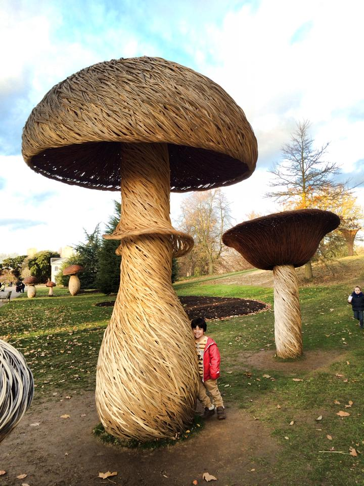 kew gardens mushrooms