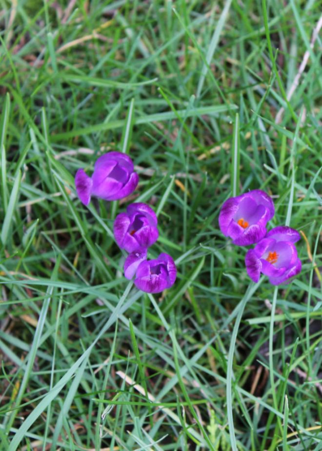 springtime flowers purple flowers