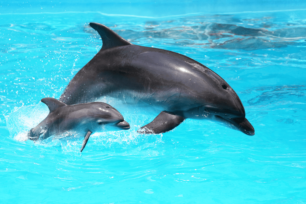 Pair of dolphins swimming