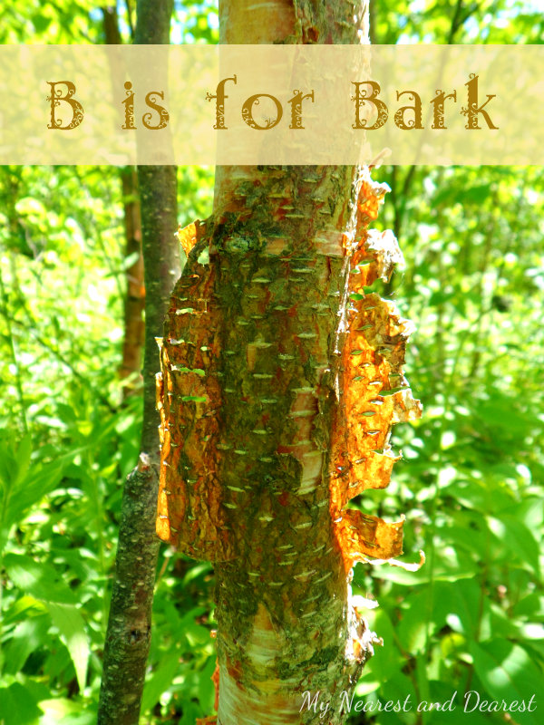 B-is-for-Bark.-Kids-activities-crafts-and-resources-for-learning-about-tree-bark.-Part-of-the-ABCs-of-Nature-series.