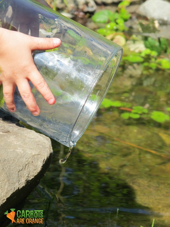 pond_dipping_nature