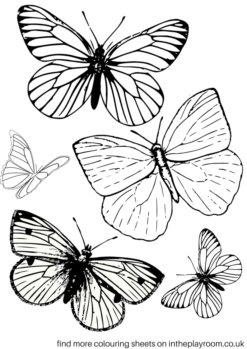 buterflies coloring pages-#43