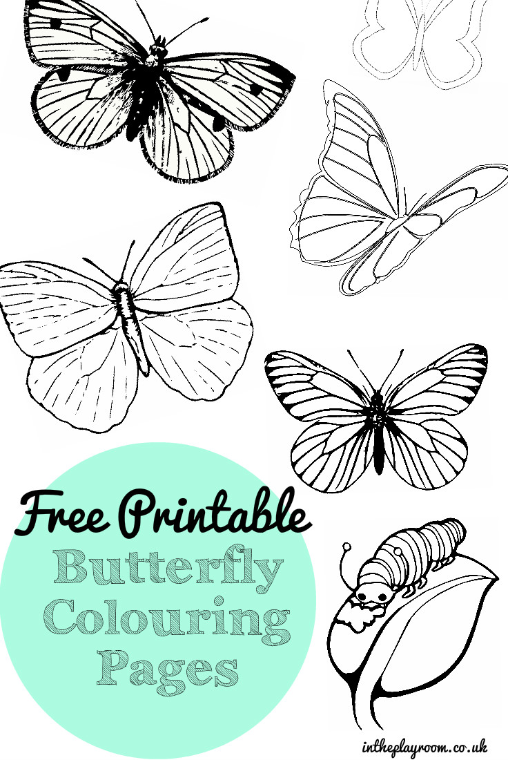 photograph about Printable Butterfly Pictures called Totally free Printable Butterfly Colouring Web pages - Within just The Playroom