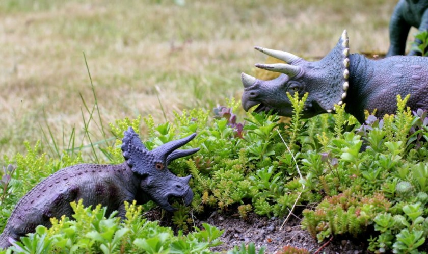 not a fairy garden but a dinosaur garden from fun at home with kids