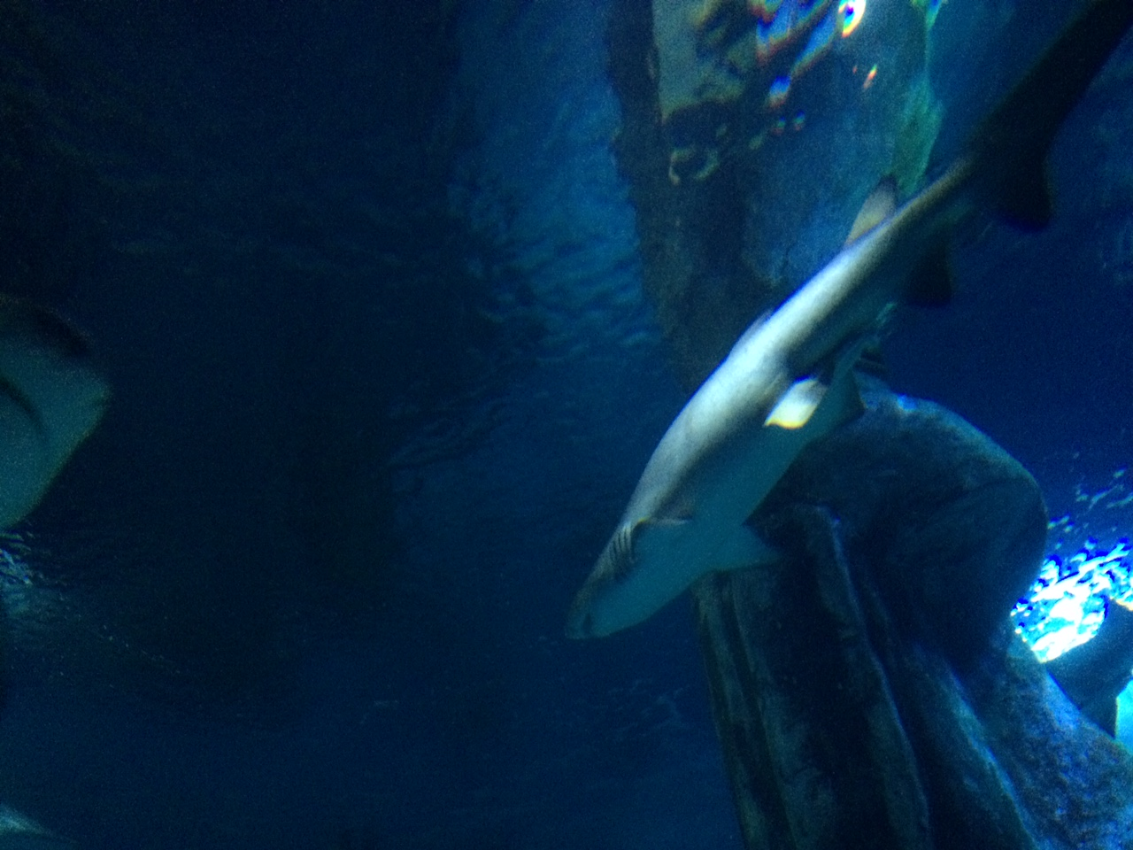 sharks at the london aquarium