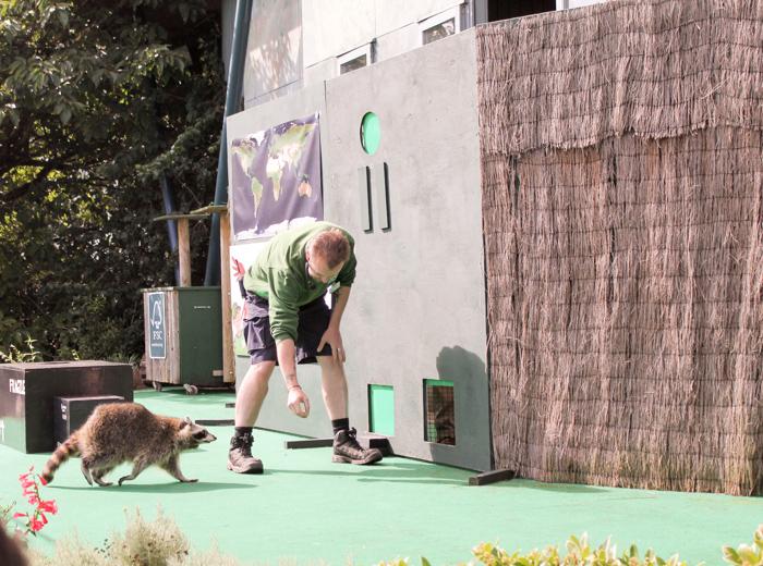 animal show bristol zoo gardens
