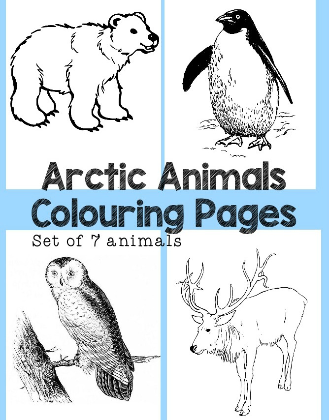arctic animals colouring pages set of 7 colouring sheets featuring penguin polar bear snowy