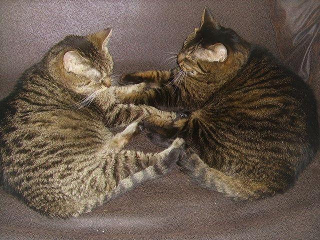 Cat connection, pets