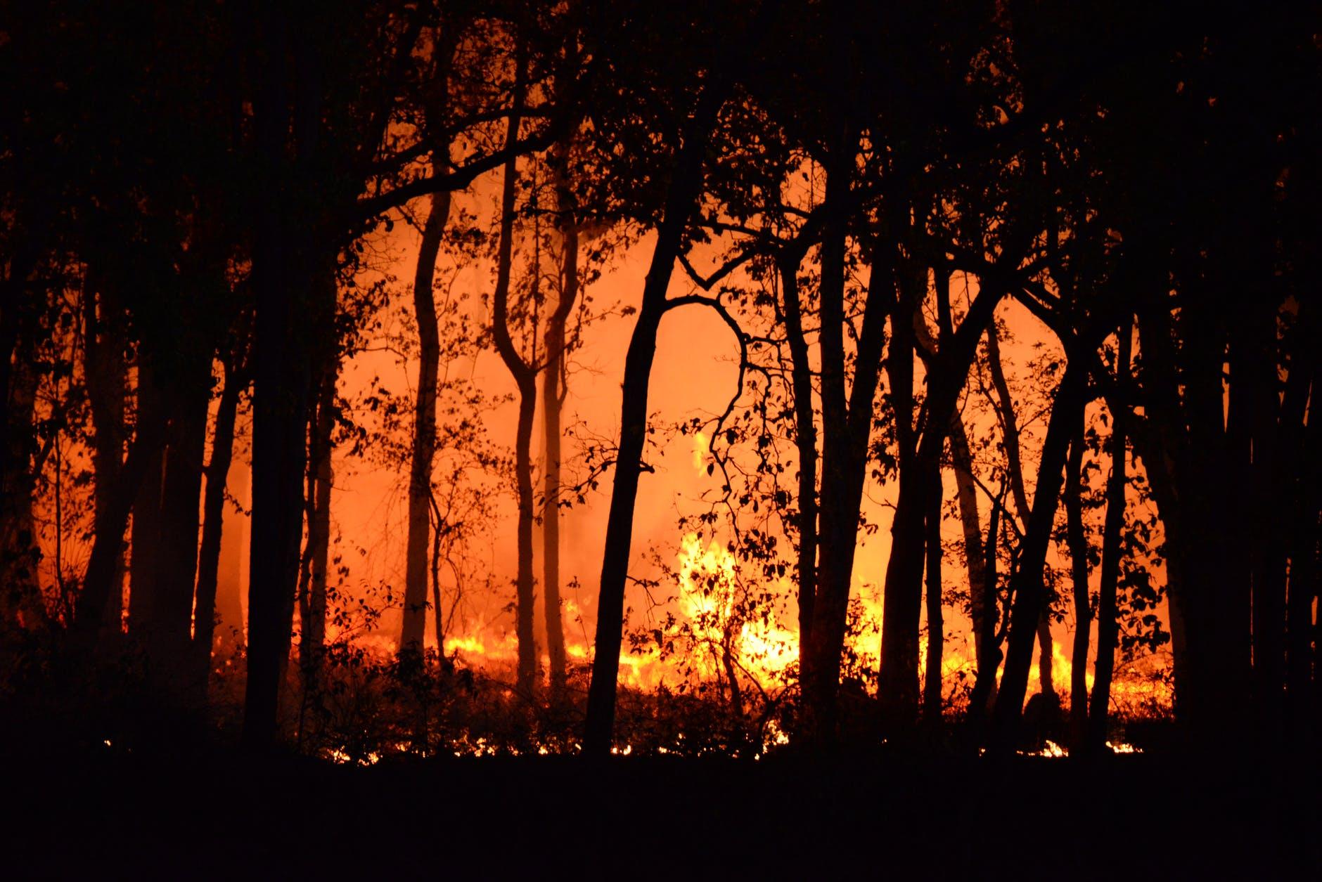 photo of burning forest