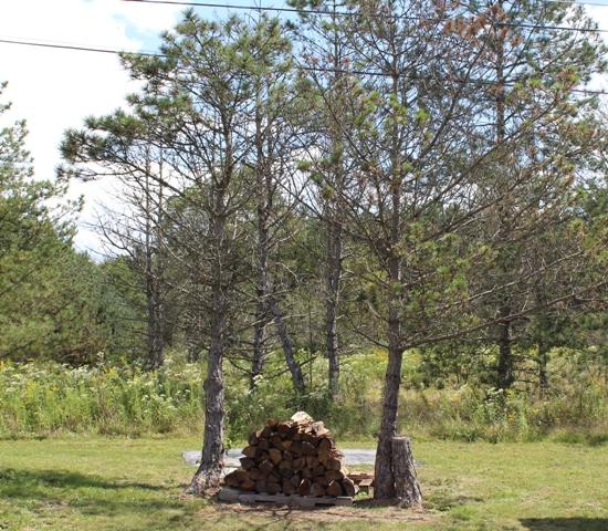 LaborDay2_firewood