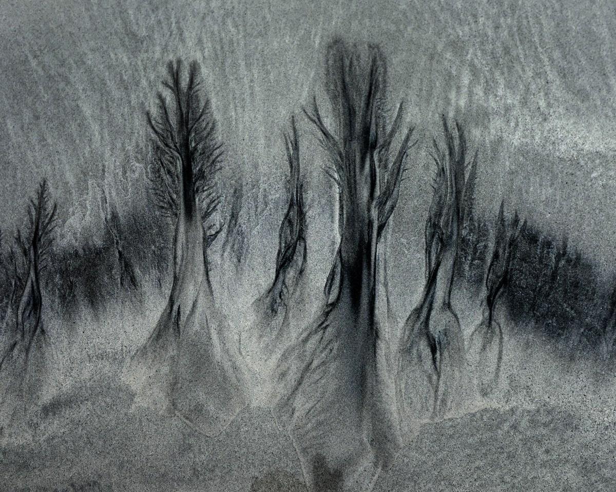 Beachtrees
