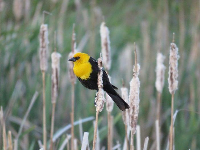Birdwatchers' eBird Data tracks trends in government bird surveys
