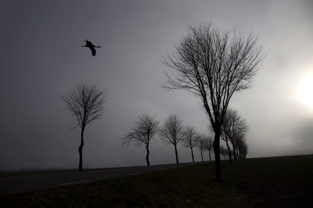 Tåge alle´