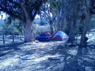 Campers in a Eucalyptus grove.