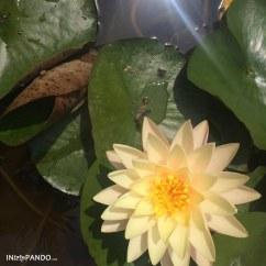 Fiore ai giardini di Ischia