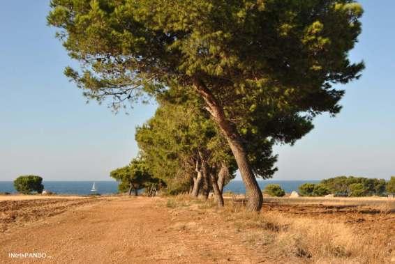Vegetazione e mare della Valle d'Itria