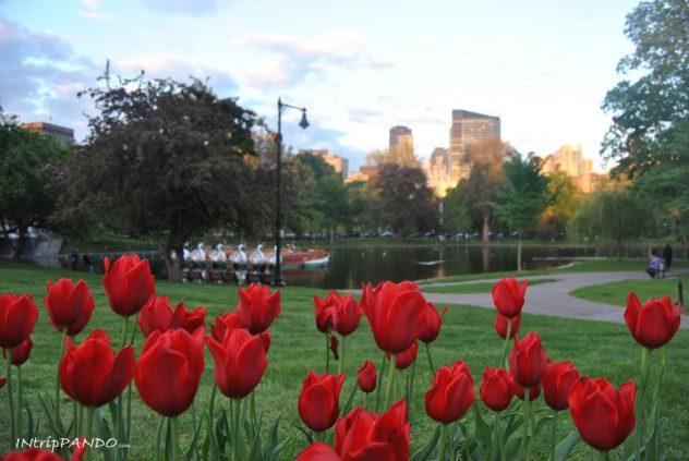 Papaveri al giardino pubblico di Boston