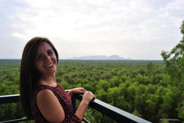 vista dall'alto della foresta di Tra Su in Vietnam