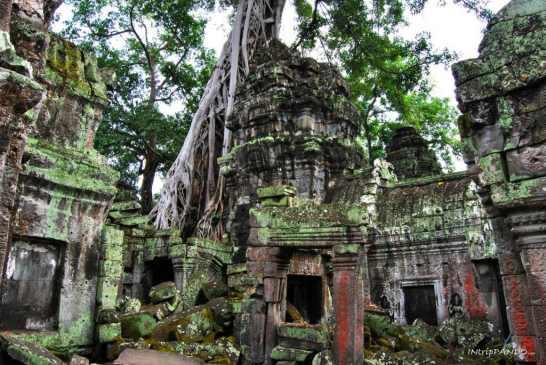 Tempio di Ta Phrom