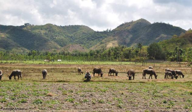 Campo destinato all'allevamento nel sud di Lombok