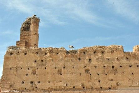 Nidi di cicogne sulle rovine di palazzo El Badi a Marrakech