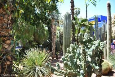 Le moltissimie specie di piante dei giardini Majorelle