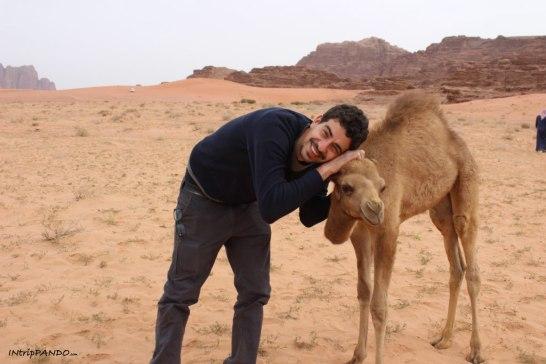 Un cucciolo di cammello nel Wadi Rum