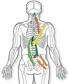 Spinal+Reflex+Therapy+Soft+Tissue+Chart.jpg