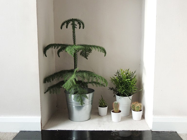 Greenery in fireplace