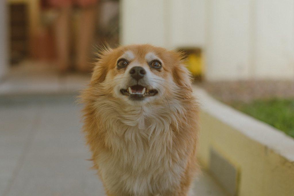 犬の講座やイベント終了後の様子、お客様の声を投稿できます